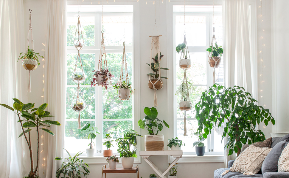 2020 Best-Selling Indoor Plants on Amazon